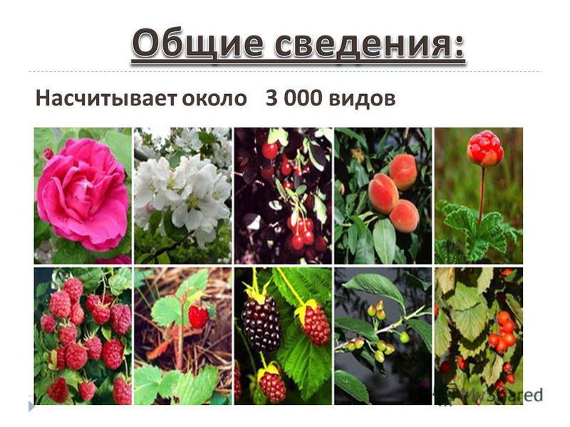 Насчитывает около 3 000 видов