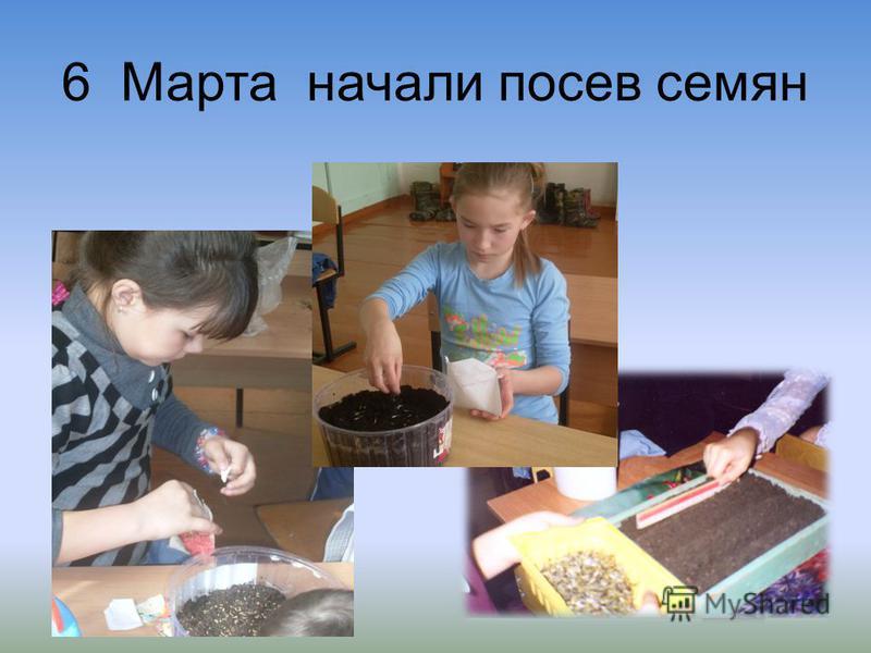 6 Марта начали посев семян