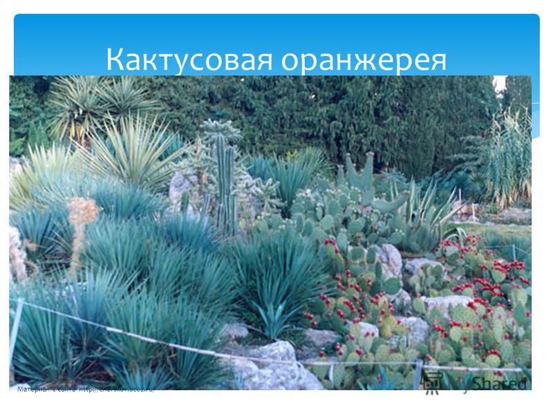 Кактусовая оранжерея Материал с сайта http://chertkov.ucoz.ru/