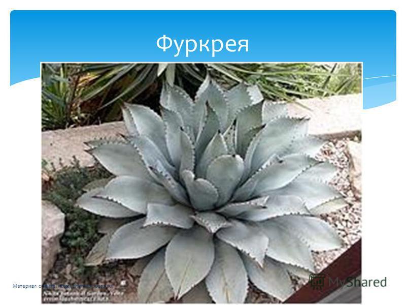 Фуркрея Материал с сайта http://chertkov.ucoz.ru/
