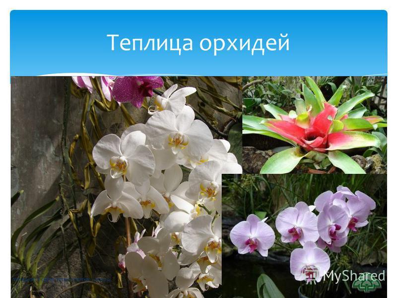 Теплица орхидей Материал с сайта http://chertkov.ucoz.ru/