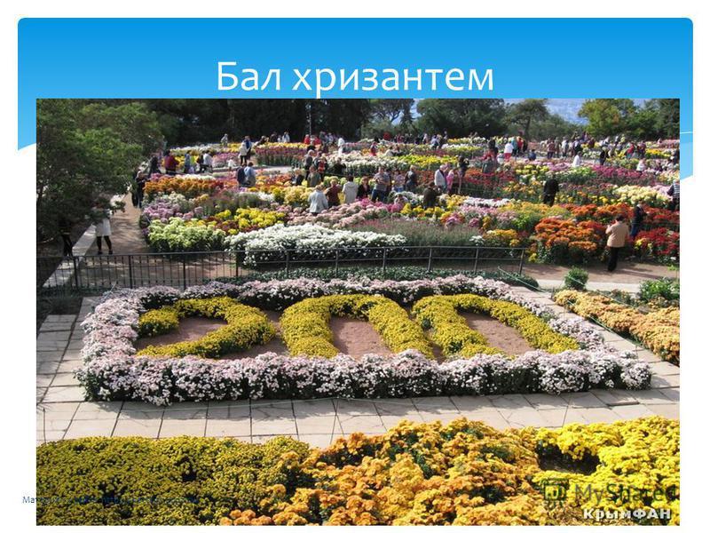 Бал хризантем Материал с сайта http://chertkov.ucoz.ru/