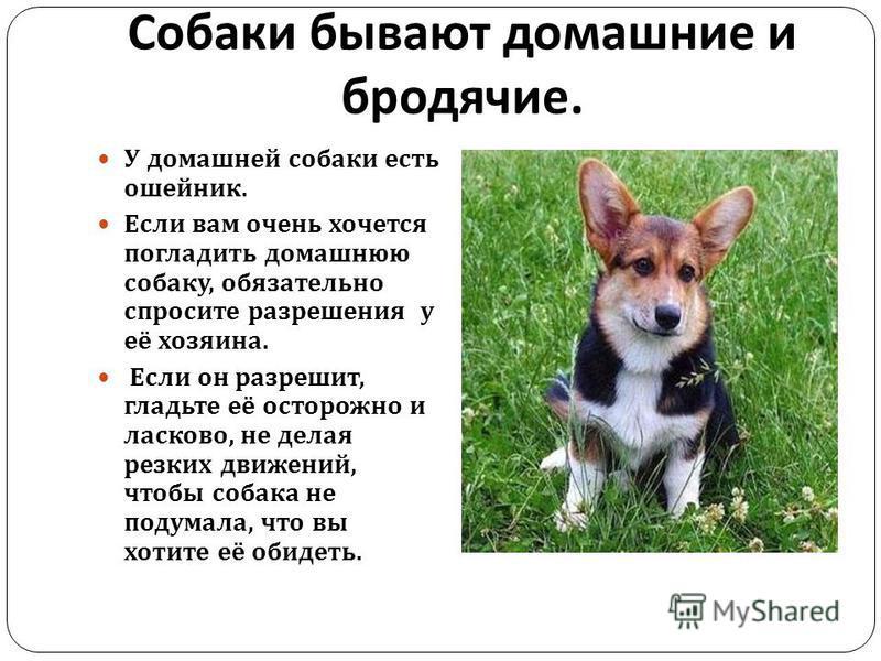 Собаки бывают домашние и бродячие. У домашней собаки есть ошейник. Если вам очень хочется погладить домашнюю собаку, обязательно спросите разрешения у её хозяина. Если он разрешит, гладьте её осторожно и ласково, не делая резких движений, чтобы собак