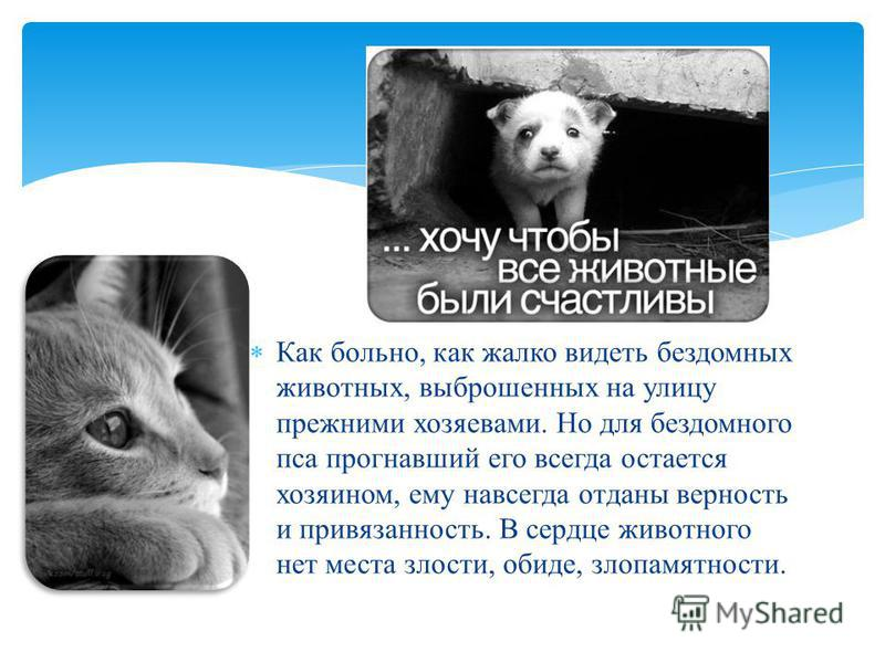 Как больно, как жалко видеть бездомных животных, выброшенных на улицу прежними хозяевами. Но для бездомного пса прогнавший его всегда остается хозяином, ему навсегда отданы верность и привязанность. В сердце животного нет места злости, обиде, злопамя