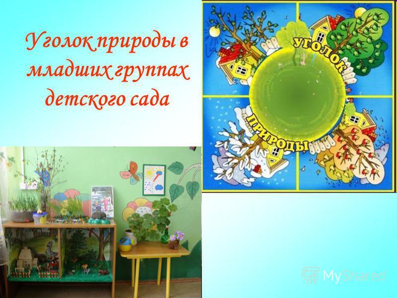 Уголок природы в младших группах детского сада