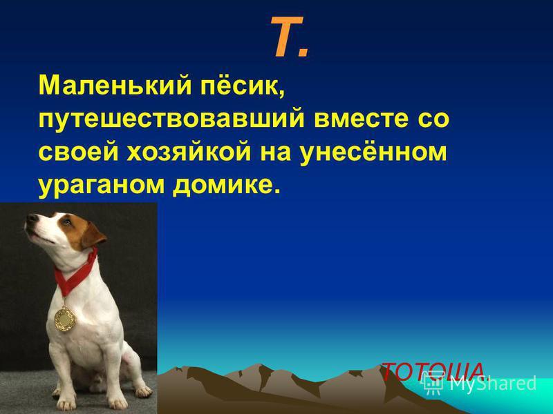 Т. Маленький пёсик, путешествовавший вместе со своей хозяйкой на унесённом ураганом домике. ТОТОША.