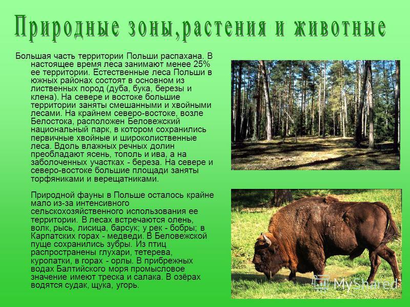 Большая часть территории Польши распахана. В настоящее время леса занимают менее 25% ее территории. Естественные леса Польши в южных районах состоят в основном из лиственных пород (дуба, бука, березы и клена). На севере и востоке большие территории з