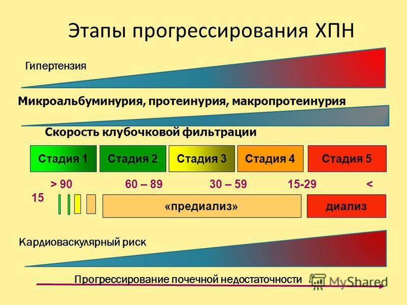 Этапы прогрессирования ХПН «предиализ»диализ Прогрессирование почечной недостаточности Стадия 5Стадия 4Стадия 3Стадия 2Стадия 1 Скорость клубочковой фильтрации > 90 60 – 89 30 – 59 15-29 < 15 Микроальбуминурия, протеинурия, макро протеинурия Гипертен