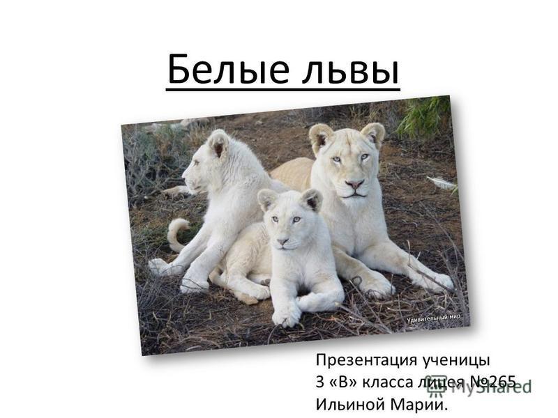 Белые львы Презентация ученицы 3 «В» класса лицея 265 Ильиной Марии.
