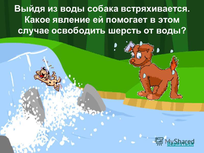 Выйдя из воды собака встряхивается. Какое явление ей помогает в этом случае освободить шерсть от воды? Вернуться