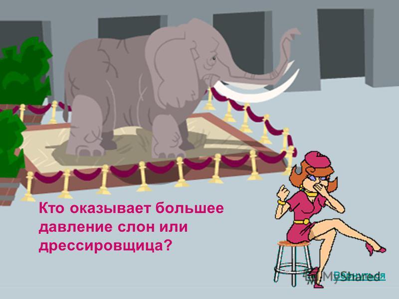 Кто оказывает большее давление слон или дрессировщица? Вернуться