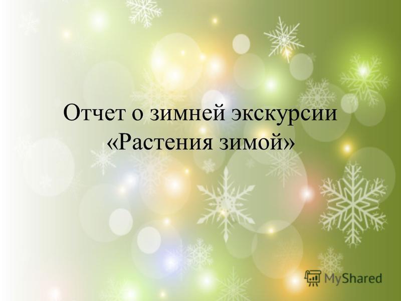 Отчет о зимней экскурсии «Растения зимой»