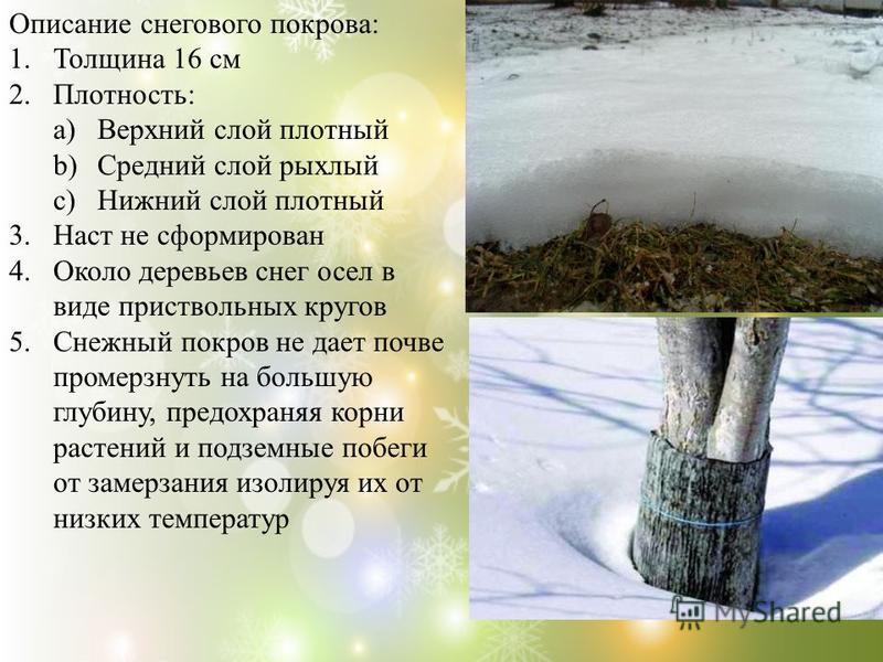 Описание снегового покрова: 1. Толщина 16 см 2.Плотность: a)Верхний слой плотный b)Средний слой рыхлый c)Нижний слой плотный 3. Наст не сформирован 4. Около деревьев снег осел в виде приствольных кругов 5. Снежный покров не дает почве промерзнуть на