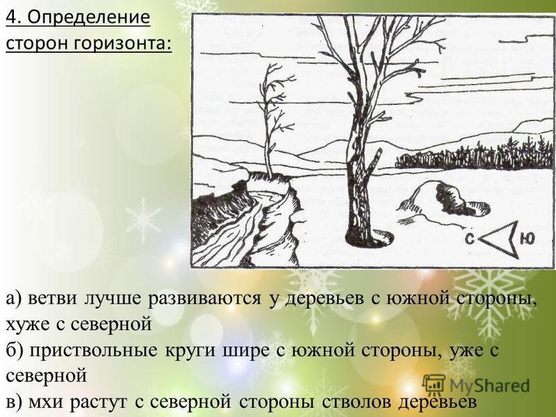 4. Определение сторон горизонта: а) ветви лучше развиваются у деревьев с южной стороны, хуже с северной б) приствольные круги шире с южной стороны, уже с северной в) мхи растут с северной стороны стволов деревьев