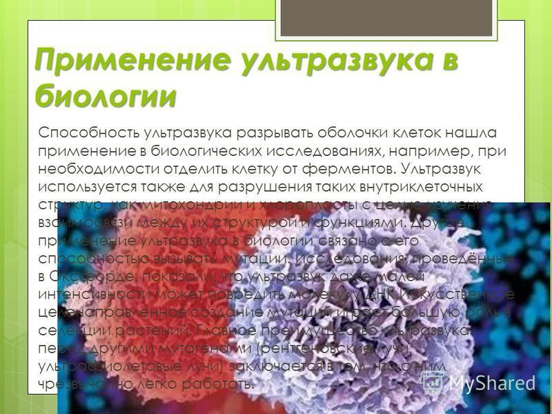 Применение ультразвука в биологии Способность ультразвука разрывать оболочки клеток нашла применение в биологических исследованиях, например, при необходимости отделить клетку от ферментов. Ультразвук используется также для разрушения таких внутрикле