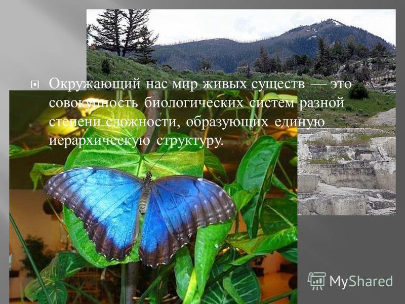 Окружающий нас мир живых существ это совокупность биологических систем разной степени сложности, образующих единую иерархическую структуру.