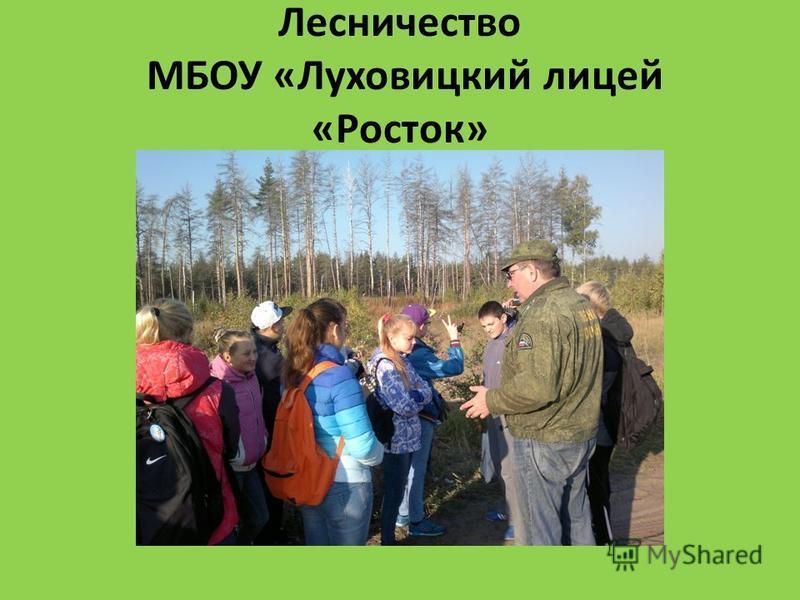 Лесничество МБОУ «Луховицкий лицей «Росток»