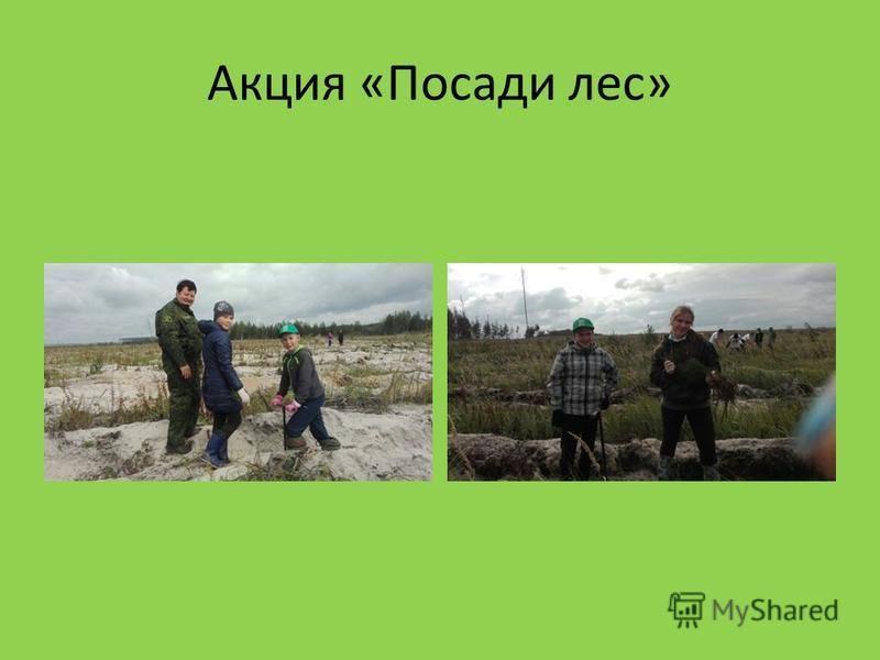 Акция «Посади лес»