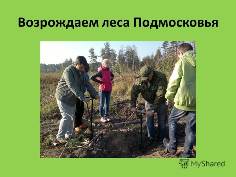 Возрождаем леса Подмосковья