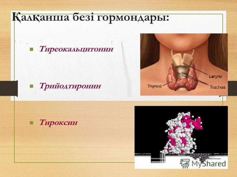 Қ ал қ наша безі гормон дары: Тиреокальцитонин Трийодтиронин Тироксин