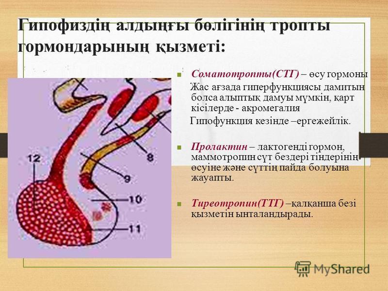 Гипофиздің алтыңғы бөлігінің тропы гормон дарының қызметі: Соматотропы(СТГ) – өсу гормоны Жас ағзада гиперфункциясы дамитын бокса алыптық дамуы мүмкін, қарт кісілерде - акромегалия Гипофункция кезінде –ергежейлік. Пролактин – лактогенді гормон, маммо