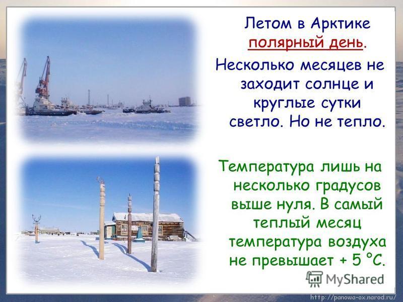 Летом в Арктике полярный день. Несколько месяцев не заходит солнце и круглые сутки светло. Но не тепло. Температура лишь на несколько градусов выше нуля. В самый теплый месяц температура воздуха не превышает + 5 °C.