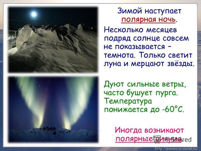 Зимой наступает полярная ночь. Несколько месяцев подряд солнце совсем не показывается – темнота. Только светит луна и мерцают звёзды. Дуют сильные ветры, часто бушует пурга. Температура понижается до -60°С. Иногда возникают полярные сияния.