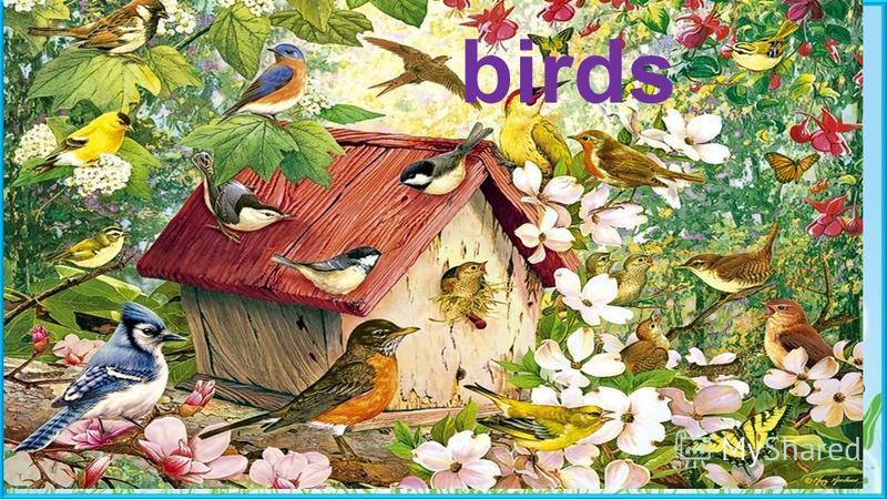 birds Пасечник Е.А. birds