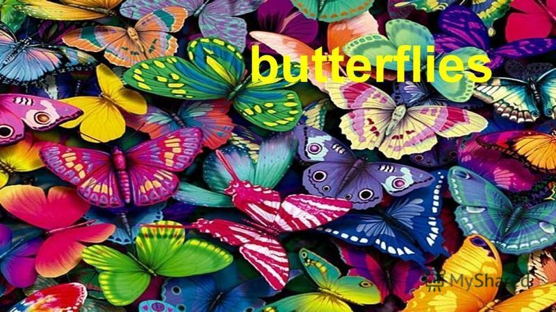 Butterflies Пасечник Е.А. butterflies