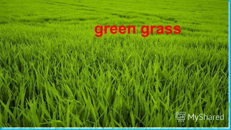 Green grass Пасечник Е.А. green grass