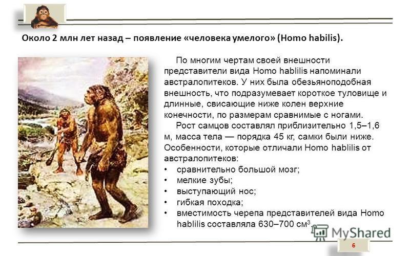 6 6 Около 2 млн лет назад – появление «человека умелого» (Homo habilis). По многим чертам своей внешности представители вида Homo hablilis напоминали австралопитеков. У них была обезьяноподобная внешность, что подразумевает короткое туловище и длинны