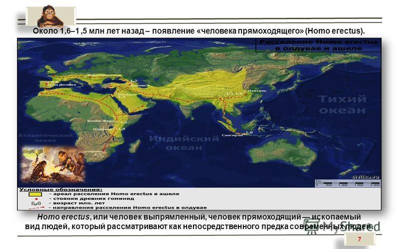 7 7 Около 1,6–1,5 млн лет назад – появление «человека прямоходящего» (Homo егесtus). Homo erectus, или человек выпрямленный, человек прямоходящий ископаемый вид людей, который рассматривают как непосредственного предка современных людей.