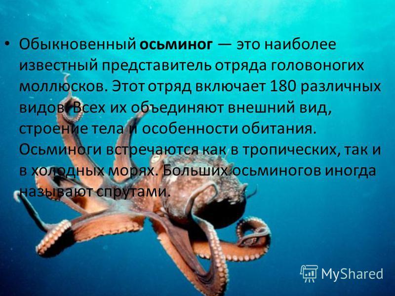 Головоногие моллюски:Кальмар Кальмары принадлежат к числу самых быстрых пловцов, уступая в скорости только таким спринтерам моря, как меч-рыба, тунцы и дельфины. Кальмар - одни из самых необычных морских существ. У него не одно, а три сердца. Несмотр