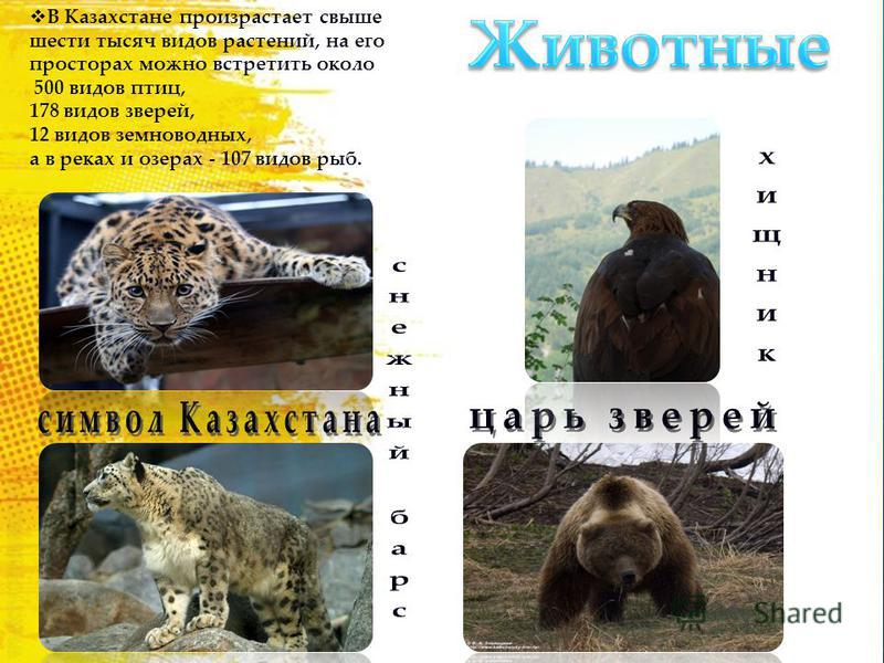 В Казахстане произрастает свыше шести тысяч видов растений, на его просторах можно встретить около 500 видов птиц, 178 видов зверей, 12 видов земноводных, а в реках и озерах - 107 видов рыб.