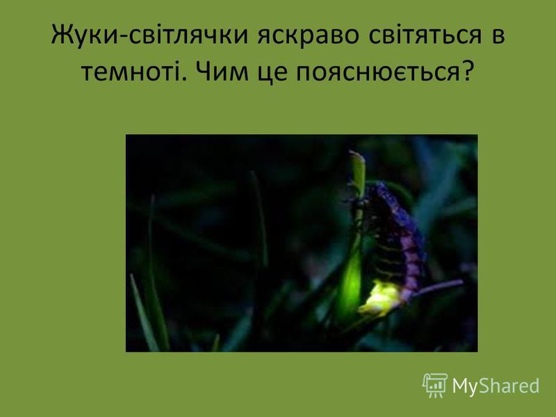 Жуки-світлячки яскраво світяться в темноті. Чим це пояснюється?