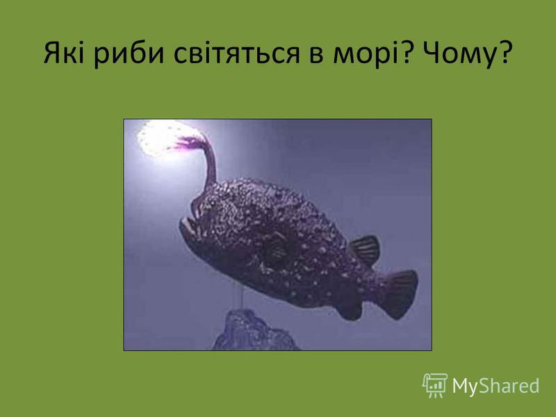 Які риби світяться в морі? Чому?