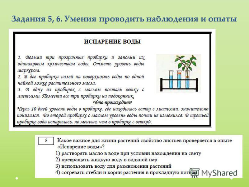 Задания 5, 6. Умения проводить наблюдения и опыты