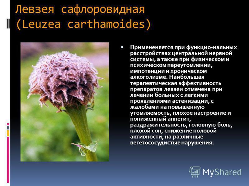 Левзея сафлоровидная (Leuzea carthamoides) Примененяется при функцио-нальных расстройствах центральной нервной системы, а также при физическом и психическом переутомлении, импотенции и хроническом алкоголизме. Наибольшая терапевтическая эффективность