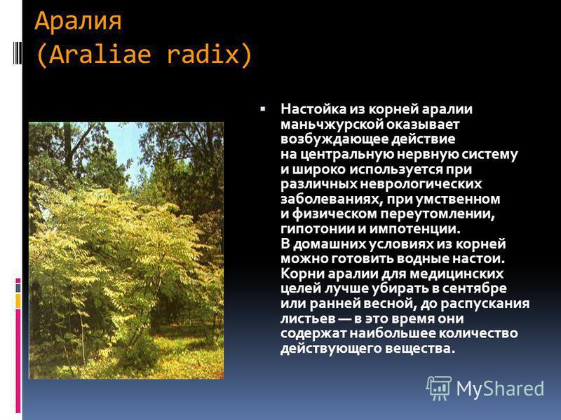 Аралия (Araliae radix) Настойка из корней аралии маньчжурской оказывает возбуждающее действие на центральную нервную систему и широко используется при различных неврологических заболеваниях, при умственном и физическом переутомлении, гипотонии и импо