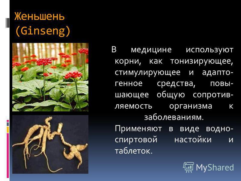 Женьшень (Ginseng) В медицине используют корни, как тонизирующее, стимулирующее и адаптогенное средства, повышающее общую сопротивляемость организма к заболеваниям. Применяют в виде водно- спиртовой настойки и таблеток.