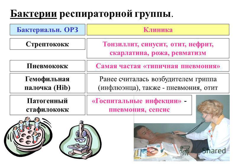 Бактерии респираторной группы. Бактериальн. ОРЗКлиника Стрептококк Тонзиллит, синусит, отит, нефрит, скарлатина, рожа, ревматизм Пневмококк Самая частая «типичная пневмония» Патогенный стафилококк «Госпитальные инфекции» - пневмония, сепсис Гемофильн