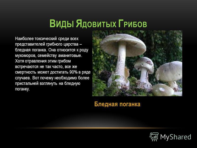 Наиболее токсический среди всех представителей грибного царства – бледная поганка. Она относится к роду мухоморов, семейству аманитовые. Хотя отравления этим грибом встречаются не так часто, все же смертность может достигать 90% в ряде случаев. Вот п