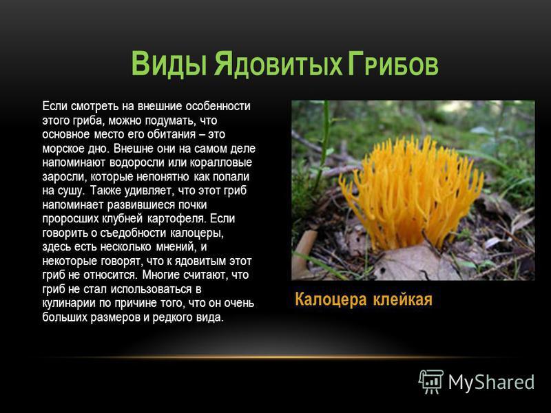 Если смотреть на внешние особенности этого гриба, можно подумать, что основное место его обитания – это морское дно. Внешне они на самом деле напоминают водоросли или коралловые заросли, которые непонятно как попали на сушу. Также удивляет, что этот