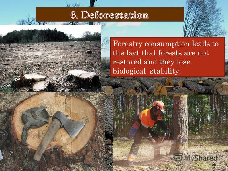 Forestry consumption leads to the fact that forests are not restored and they lose biological stability.