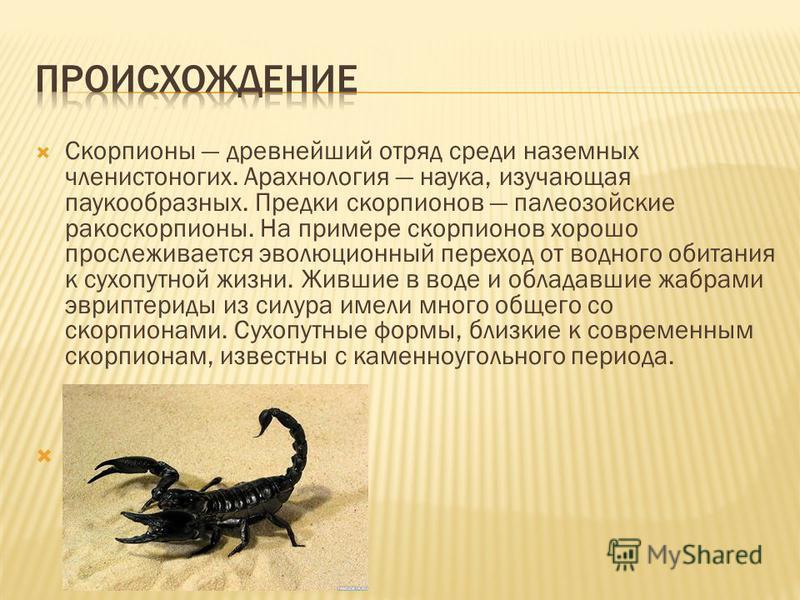 Скорпионы древнейший отряд среди наземных членистоногих. Арахнология наука, изучающая паукообразных. Предки скорпионов палеозойские ракоскорпионы. На примере скорпионов хорошо прослеживается эволюционный переход от водного обитания к сухопутной жизни