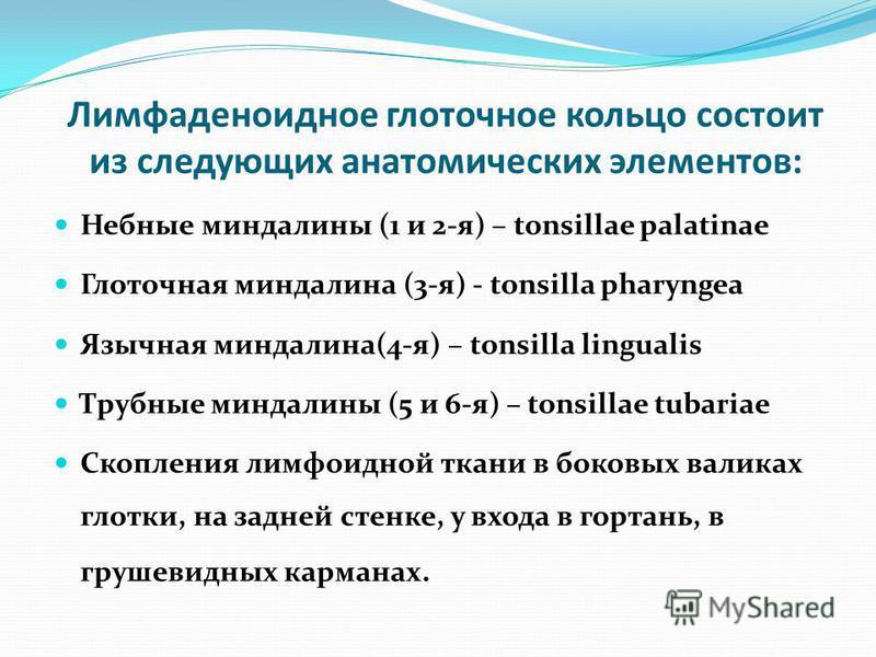 Лимфаденоидное глоточное кольцо состоит из следующих анатомических элементов: Небные миндалины (1 и 2-я) – tonsillae palatinae Глоточная миндалина (3-я) - tonsilla pharyngea Язычная миндалина(4-я) – tonsilla lingualis Трубные миндалины (5 и 6-я) – to