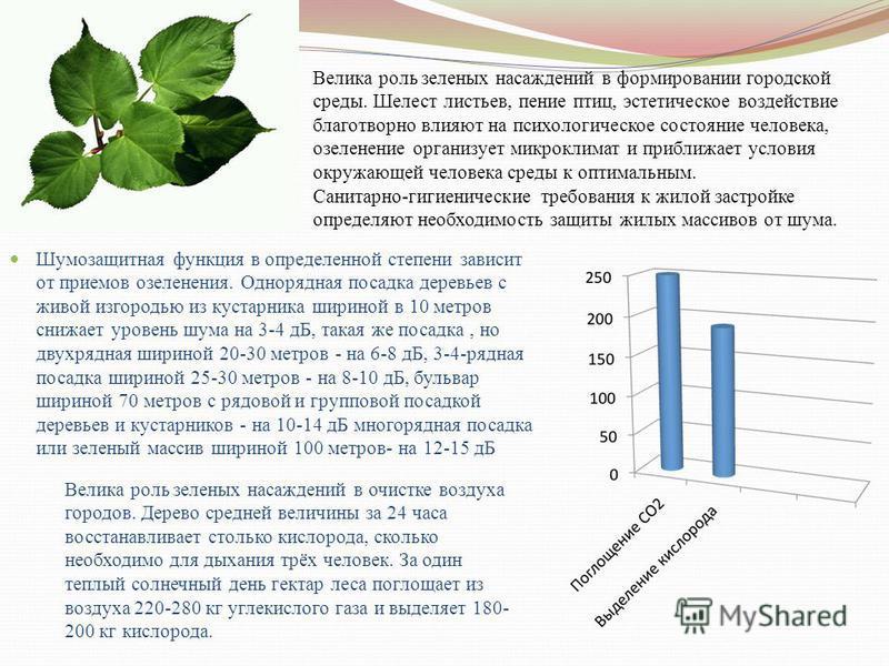 Шумозащитная функция в определенной степени зависит от приемов озеленения. Однорядная посадка деревьев с живой изгородью из кустарника шириной в 10 метров снижает уровень шума на 3-4 дБ, такая же посадка, но двухрядная шириной 20-30 метров - на 6-8 д
