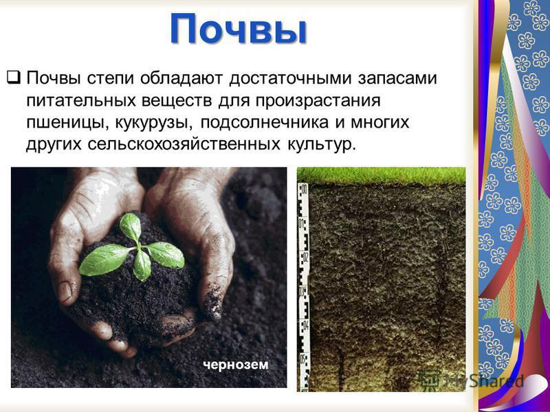 На поверхности почвы растут ксерофильные мхи, кустистые и накипные лишайники, иногда сине-зеленые водоросли из рода восток. На летный сухой период они засыхают, после дождей оживают и ассимилируют.