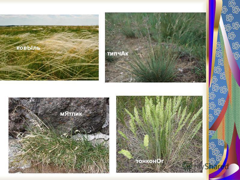 Видовое разнообразие только высших сосудистых растений, связанных со степной и лесостепной зонами, оценивается около 6 000 видов. Флористическое разнообразие степей существенно изменяется с запада на восток и с севера на юг. Так, если в европейской л