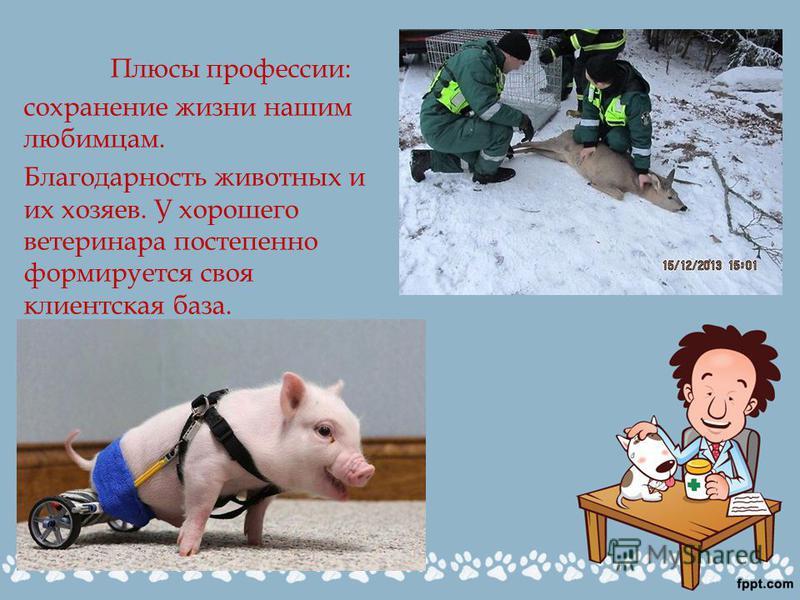 Плюсы профессии: сохранение жизни нашим любимцам. Благодарность животных и их хозяев. У хорошего ветеринара постепенно формируется своя клиентская база.
